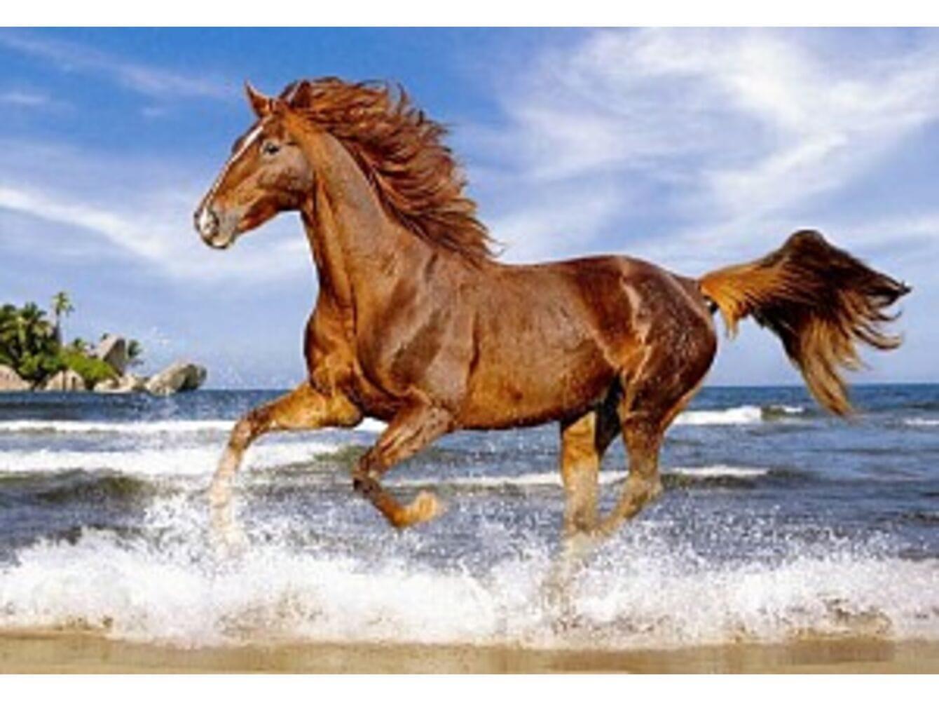 Картинки про лошадь для детей